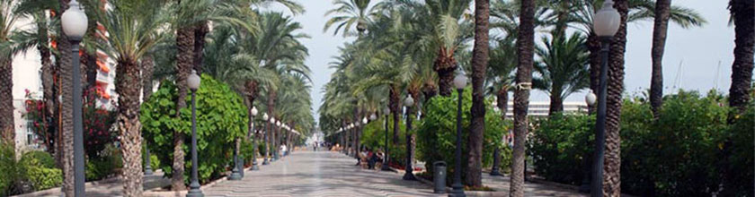 A palm-lined street in Alicante, Spain